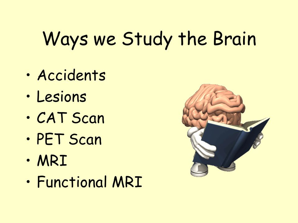 Ways we Study the Brain Accidents Lesions CAT Scan PET Scan MRI