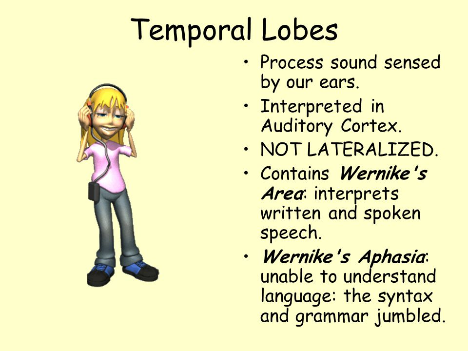 Temporal Lobes Process sound sensed by our ears.