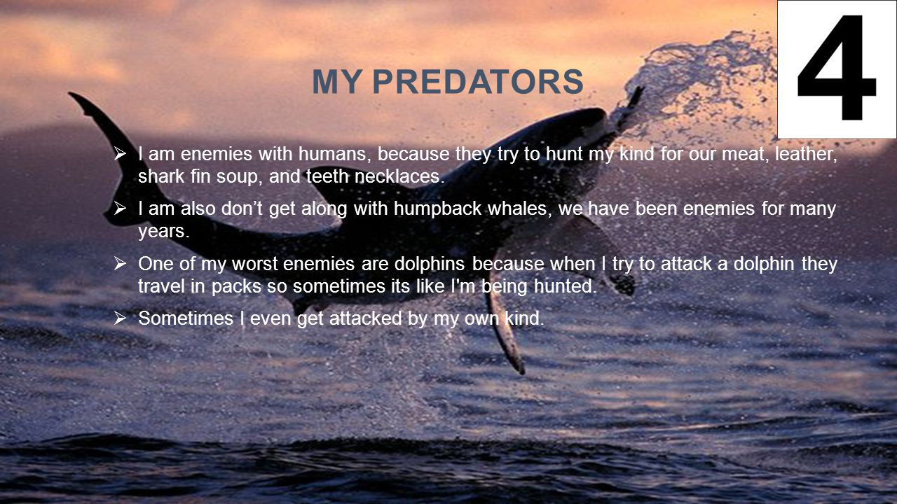 My Predators I am enemies with humans, because they try to hunt my kind for our meat, leather, shark fin soup, and teeth necklaces.