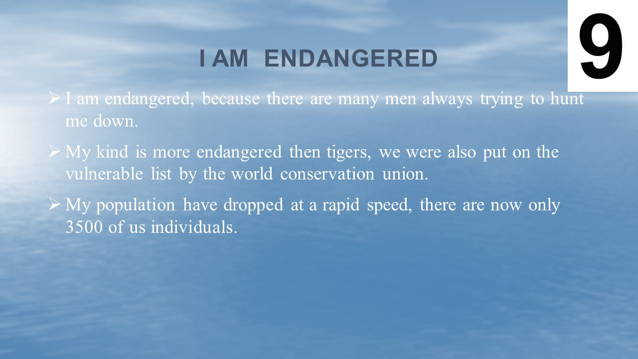 I am endangered I am endangered, because there are many men always trying to hunt me down.