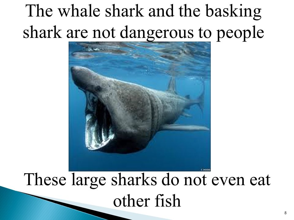 Fish 6 types of sharks ppt video online download for The fish that ate the whale