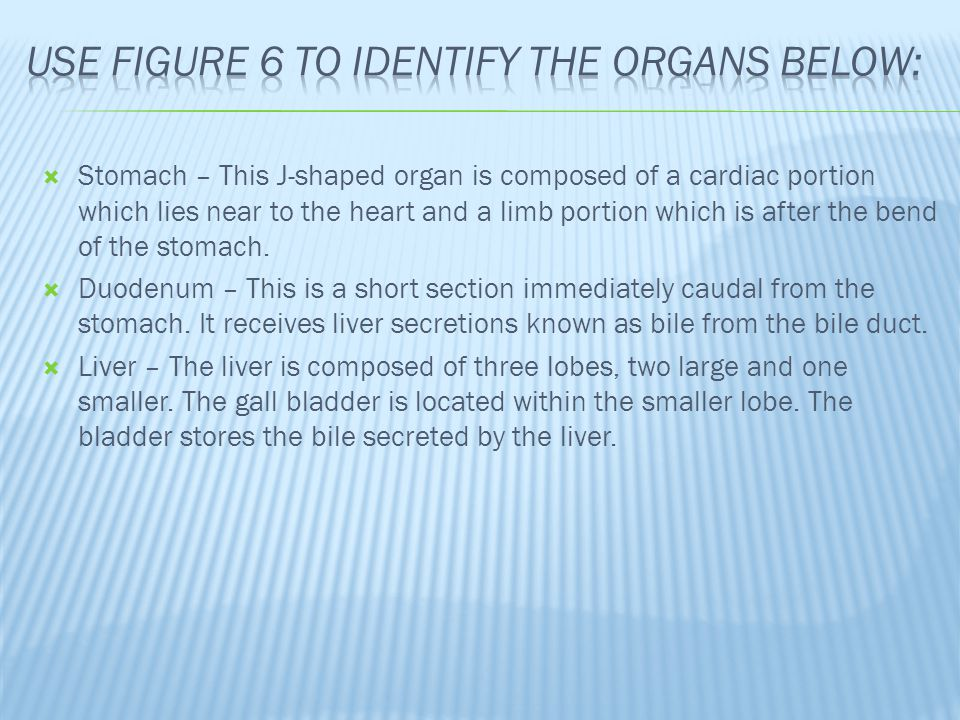 USE figure 6 To identify the organs below: