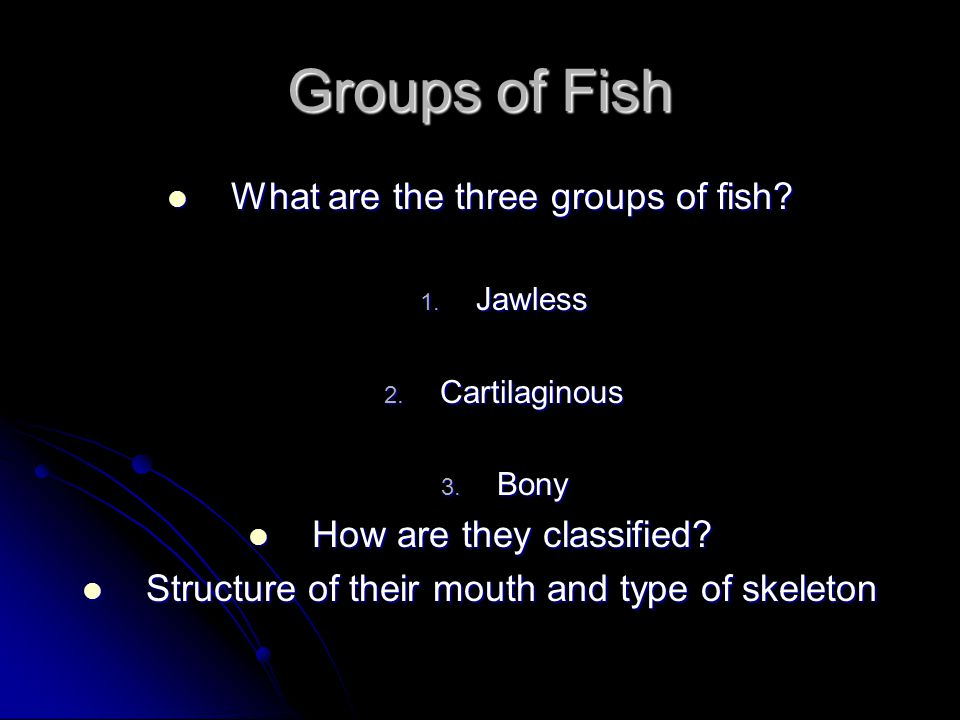 Groups of Fish What are the three groups of fish