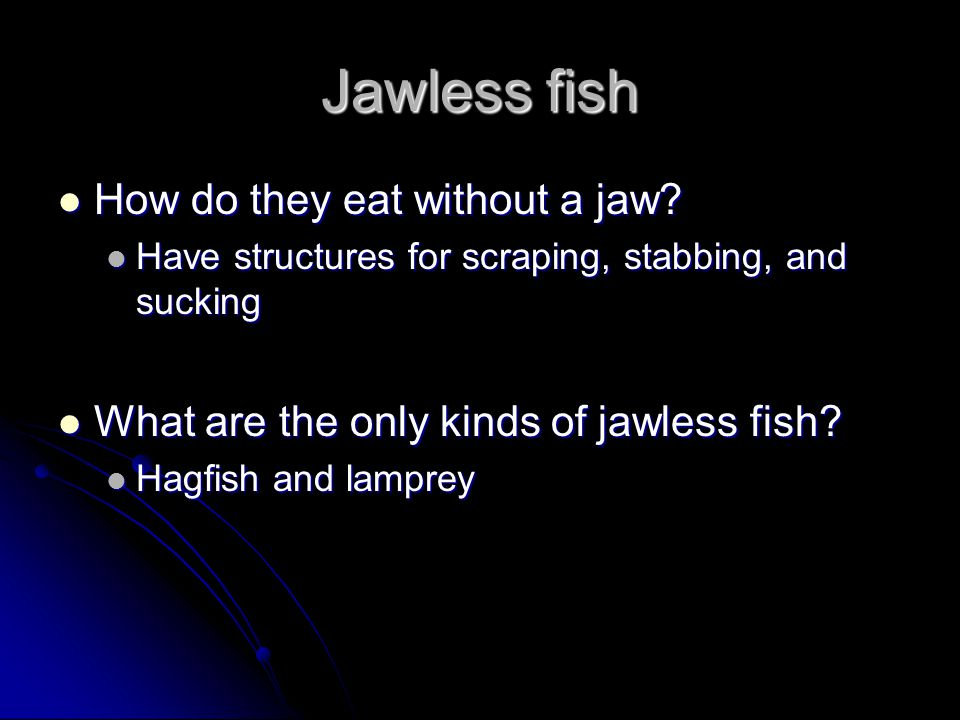 Jawless fish How do they eat without a jaw