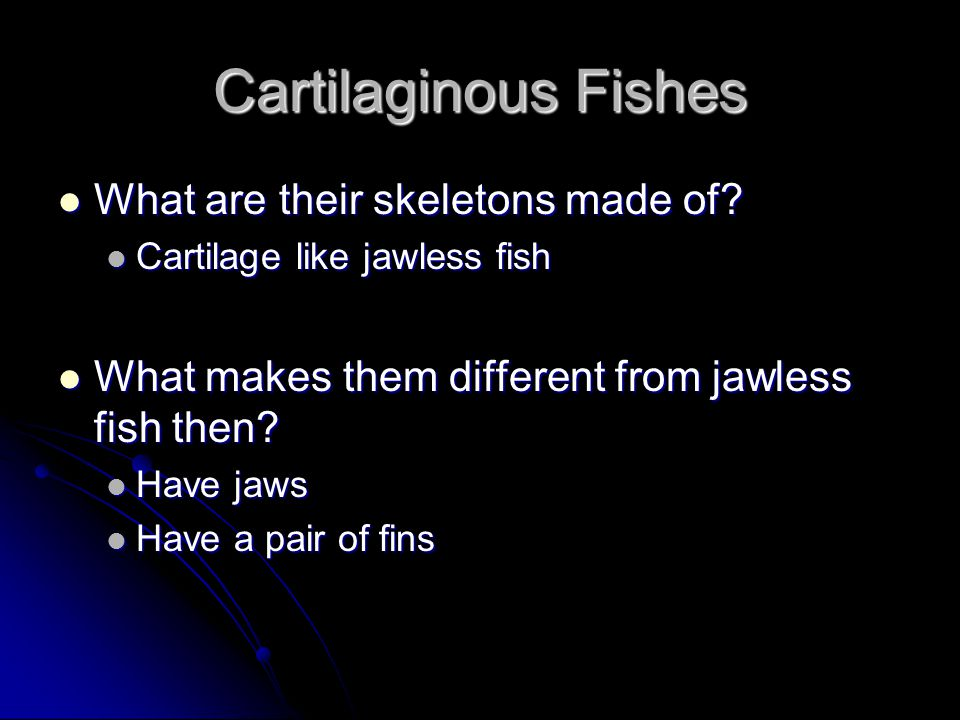 Cartilaginous Fishes What are their skeletons made of