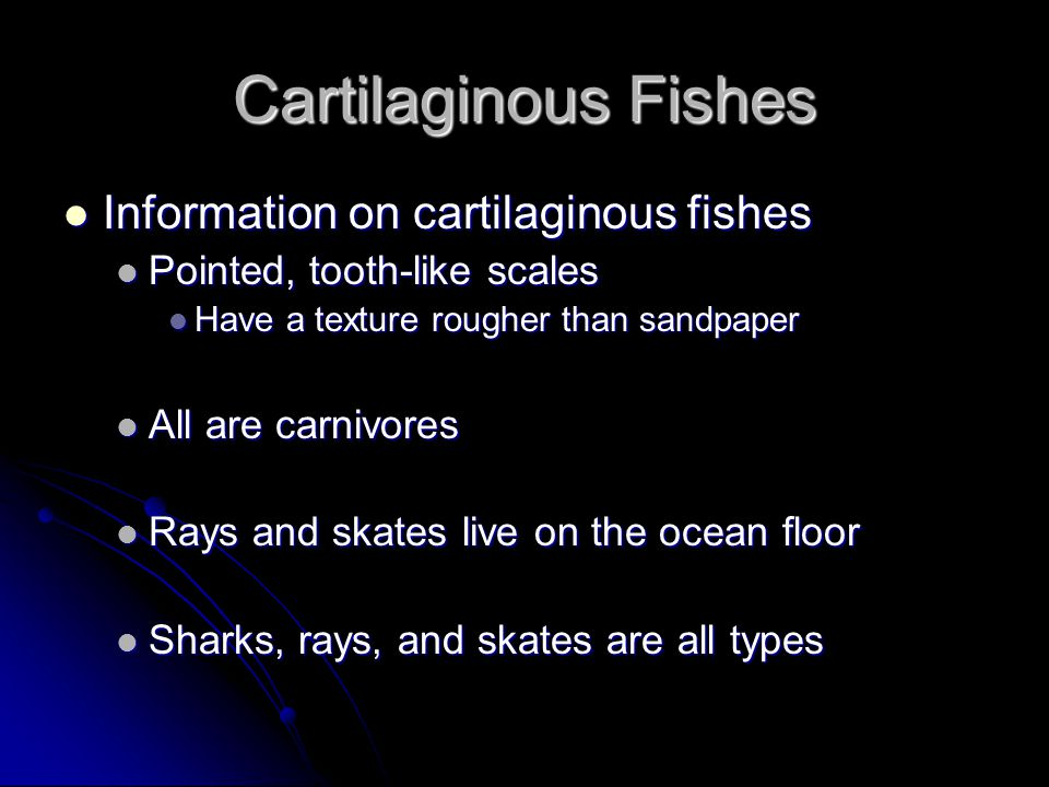 Cartilaginous Fishes Information on cartilaginous fishes