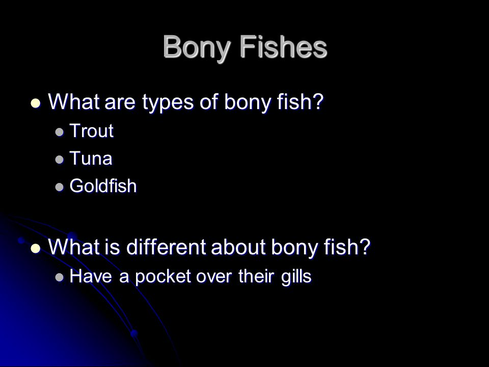 Bony Fishes What are types of bony fish