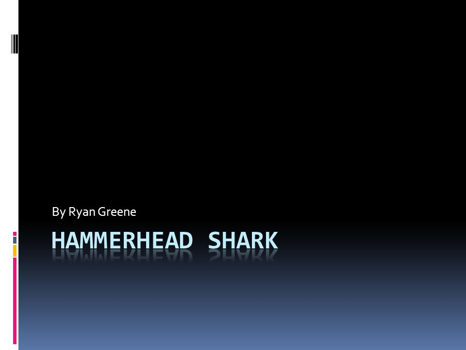By Ryan Greene Hammerhead shark