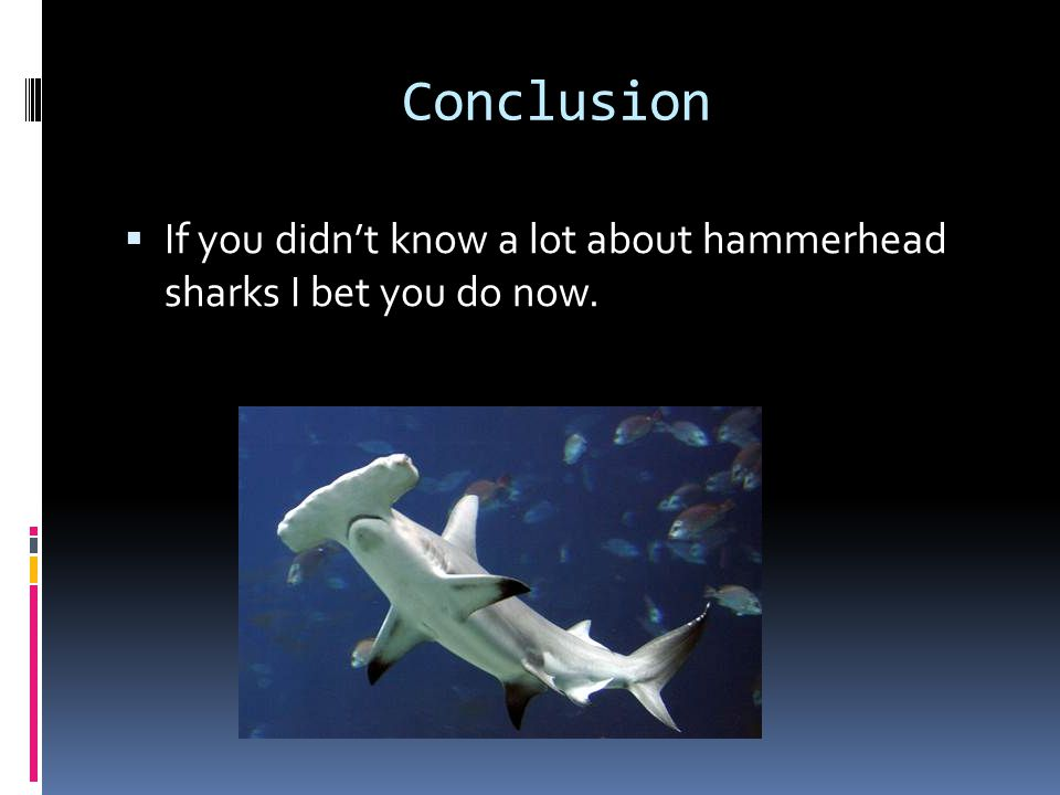 Conclusion If you didn't know a lot about hammerhead sharks I bet you do now.