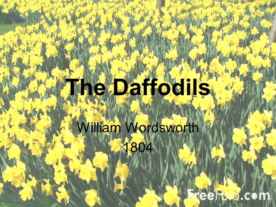 daffodils william wordsworth theme