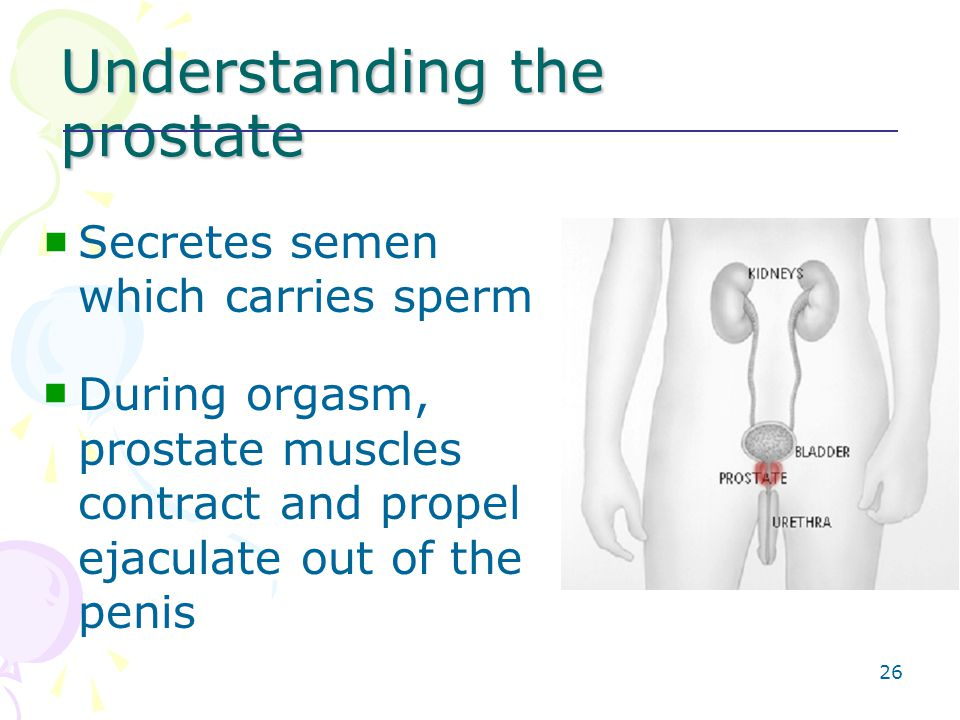 muscles around prostate contract during orgasm