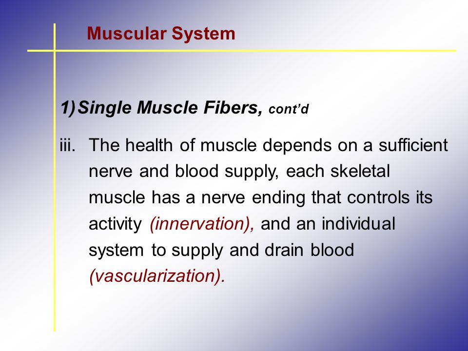 Muscular System Single Muscle Fibers, cont'd.