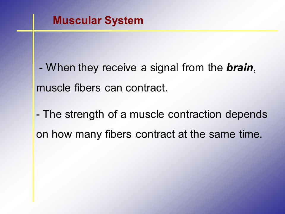 Muscular System - When they receive a signal from the brain, muscle fibers can contract.