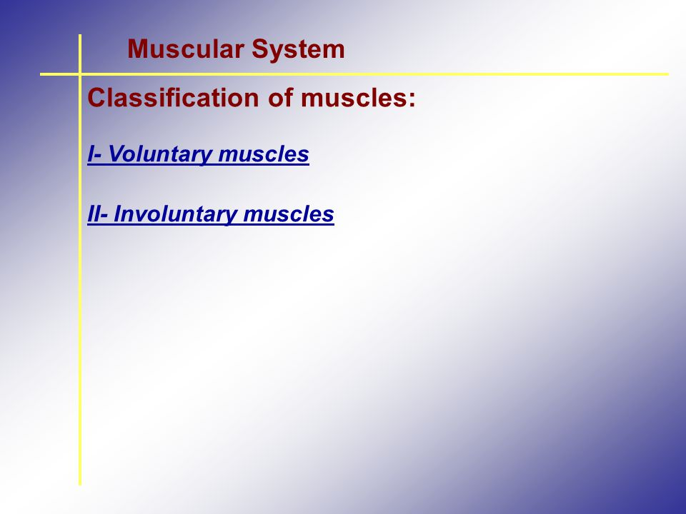 Classification of muscles: