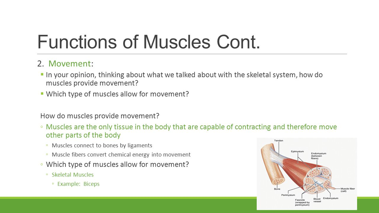 skeletal system essay questions Essays related to the muscular system 1 the skeletal system is an important organ system got a writing question.