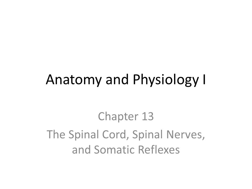 Tolle Kapitel 13 Anatomie Und Physiologie Antwortschlüssel Ideen ...