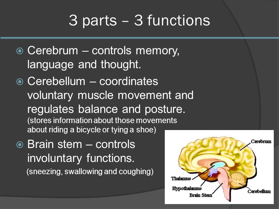 a narrative discussion on how the brain sends signals to the body It does this by receiving signals from the brain and passing them on to the body it  can also send signals in the other direction – from the body to.