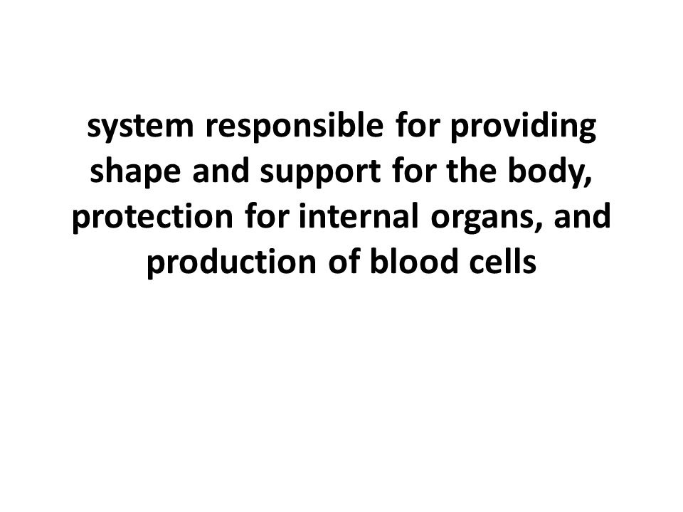 system responsible for providing shape and support for the body, protection for internal organs, and production of blood cells