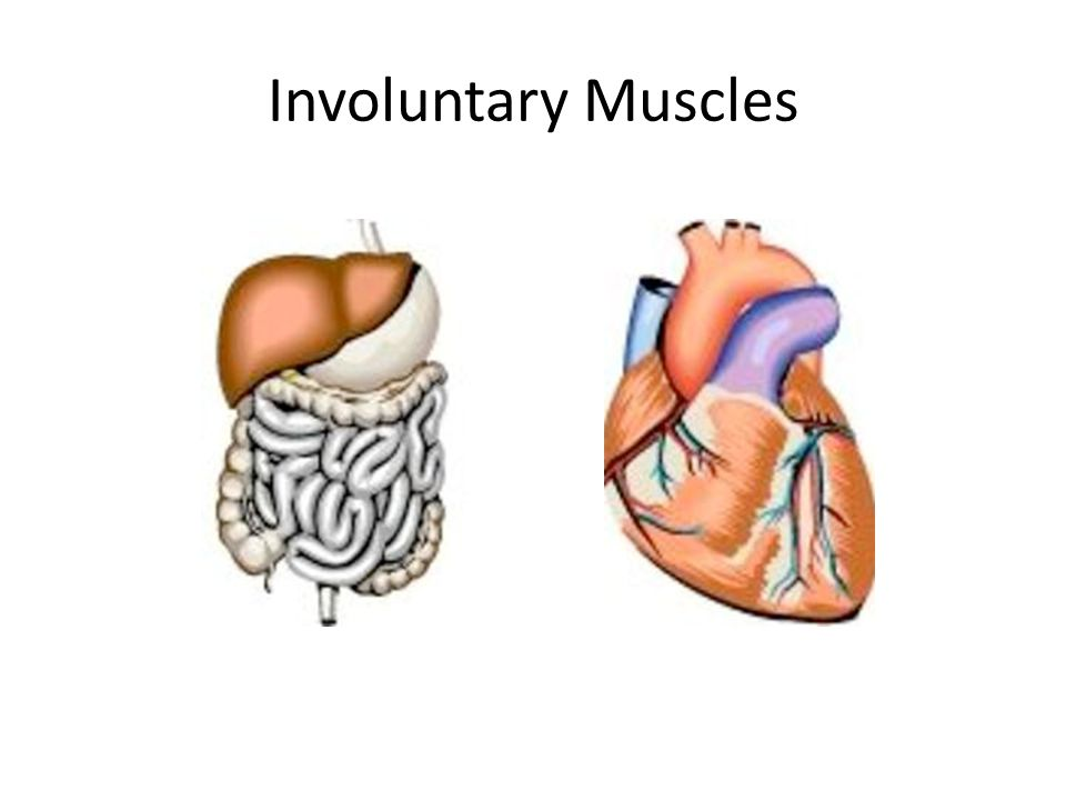 Involuntary Muscles