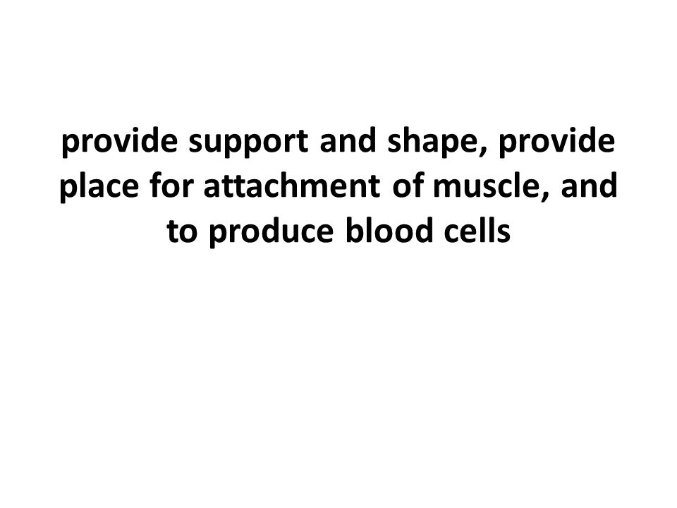 provide support and shape, provide place for attachment of muscle, and to produce blood cells