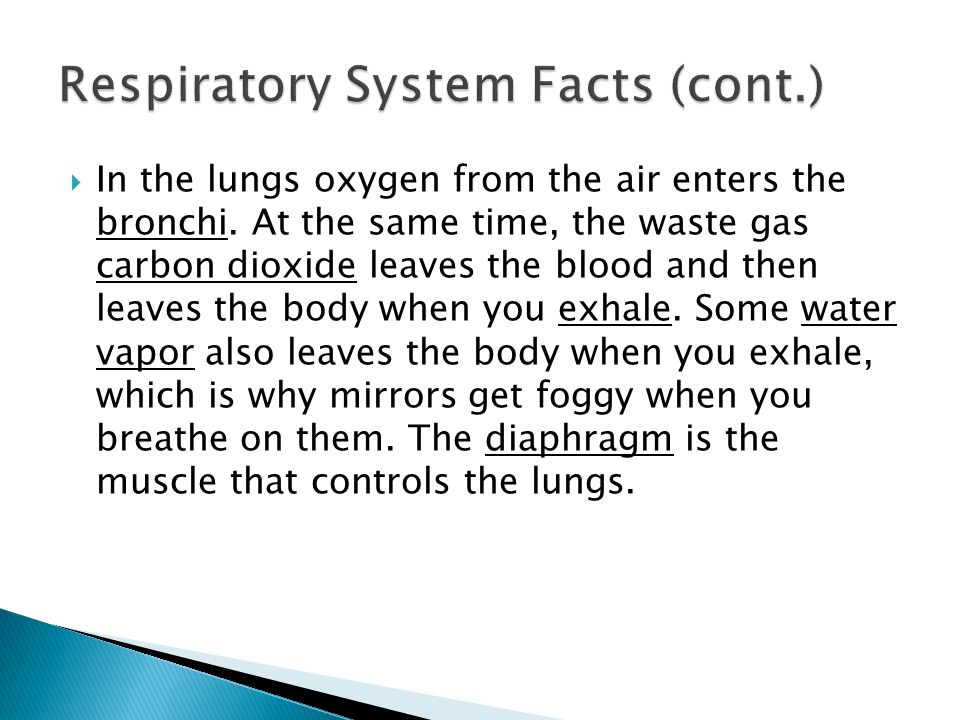 Respiratory System Facts (cont.)