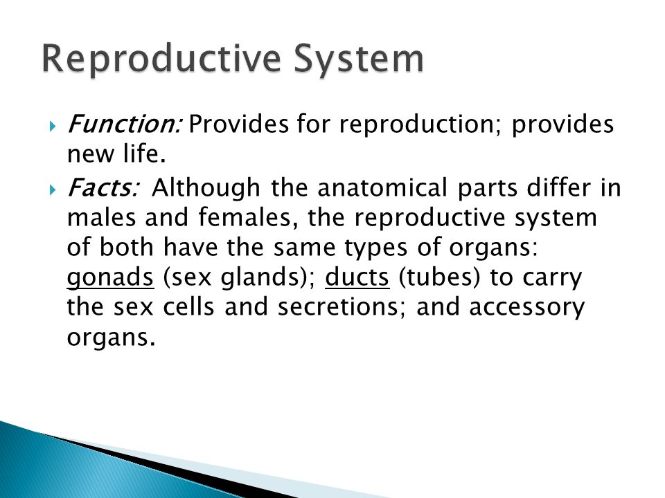 Reproductive System Function: Provides for reproduction; provides new life.