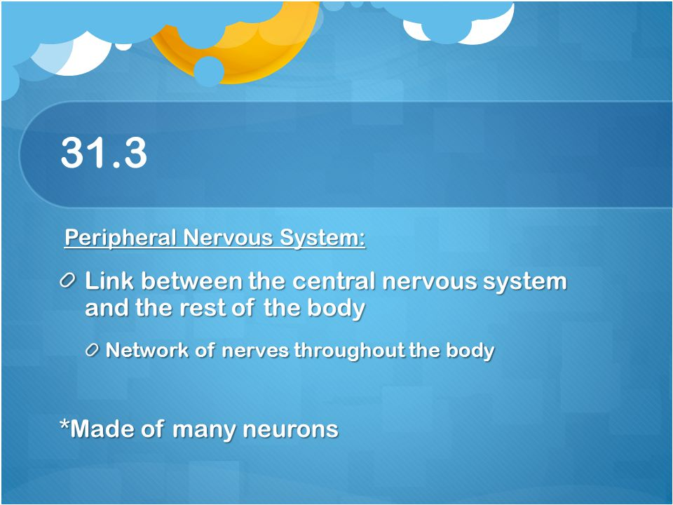 31.3 Link between the central nervous system and the rest of the body