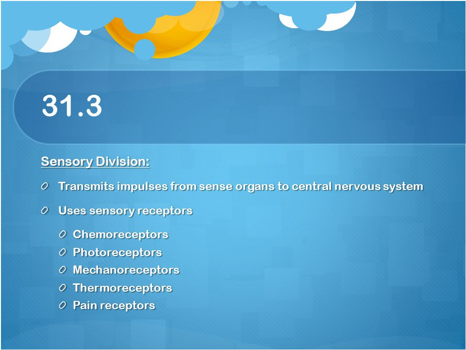 31.3 Sensory Division: Transmits impulses from sense organs to central nervous system. Uses sensory receptors.