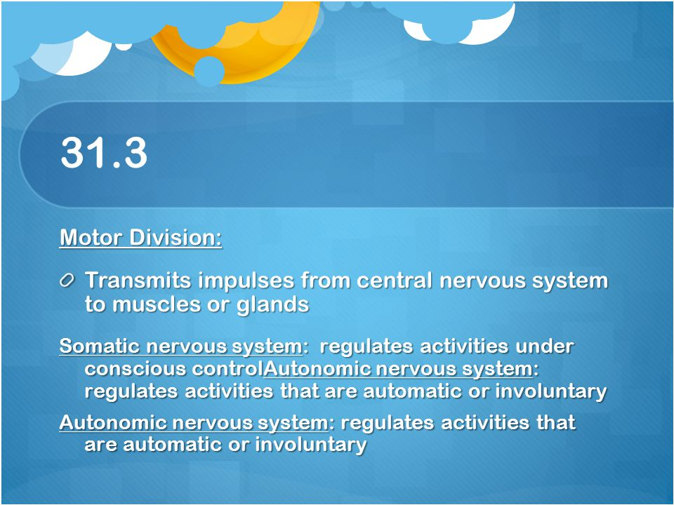 31.3 Motor Division: Transmits impulses from central nervous system to muscles or glands.