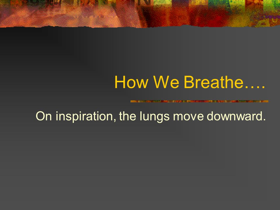 On inspiration, the lungs move downward.