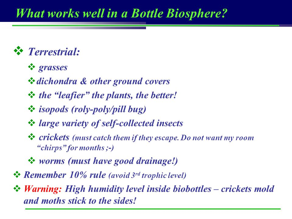 What works well in a Bottle Biosphere