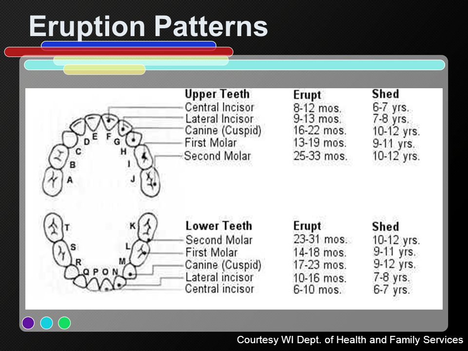 Eruption Patterns Courtesy WI Dept. of Health and Family Services