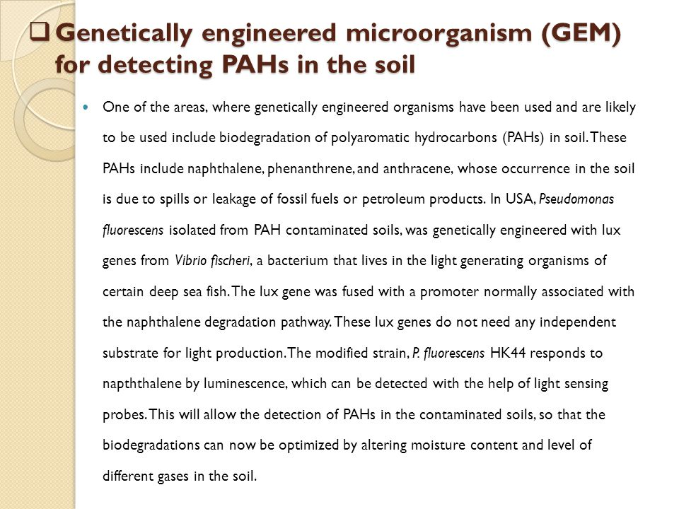 Genetically engineered microorganism (GEM) for detecting PAHs in the soil