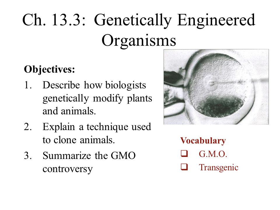 the controversies surrounding genetically modified organisms Advantages and disadvantages of genetically modified organisms biology essay  genetically modified crops would have on the surrounding wild varieties .