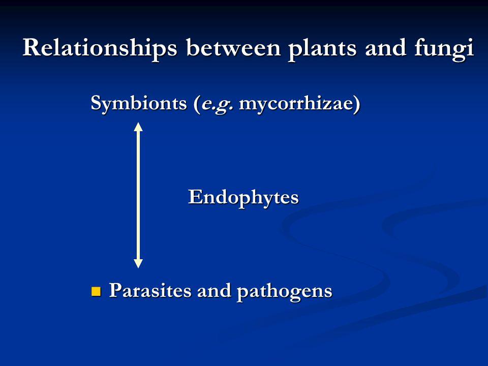 endomycorrhizal slide - photo #44
