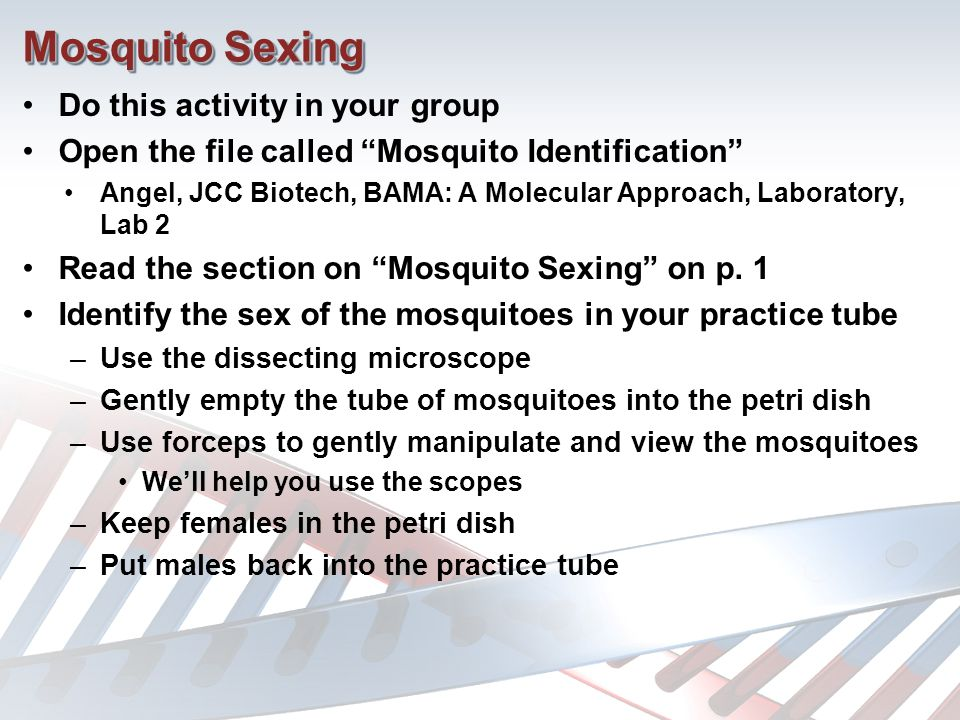 Mosquito Sexing Do this activity in your group