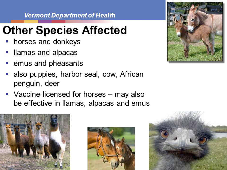 Other Species Affected