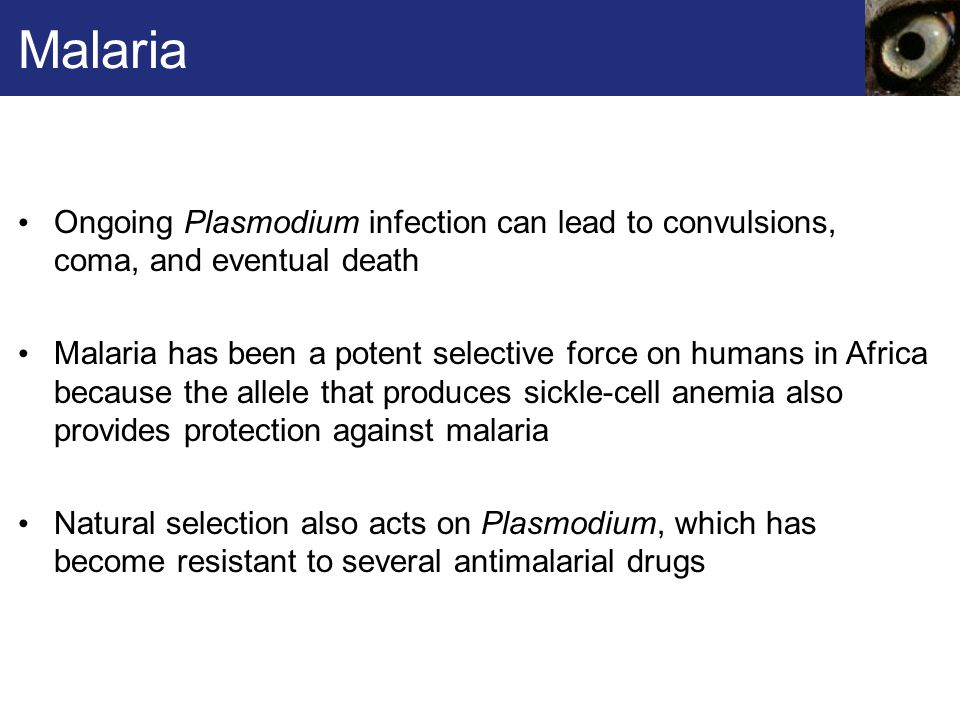 Malaria And Sickle Cell Anemia Natural Selection