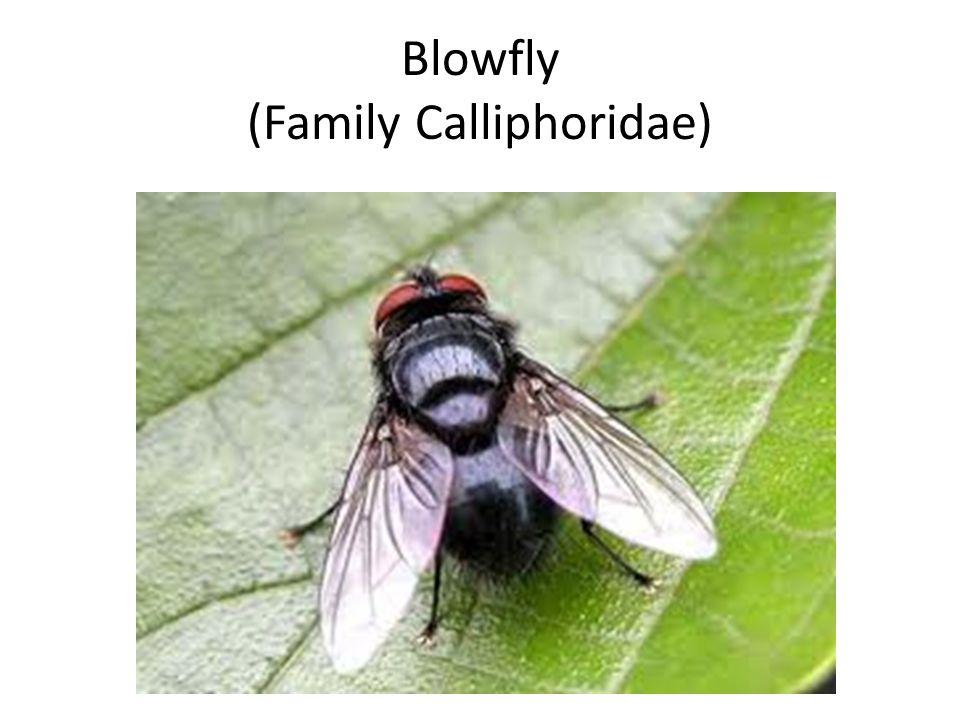 Family Ancylostomatidae Synonyms & Antonyms | Synonyms.com