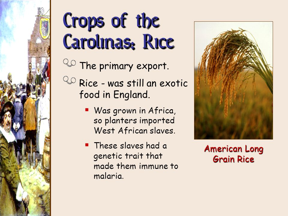 The middle southern colonies ppt download for African crops and slave cuisine