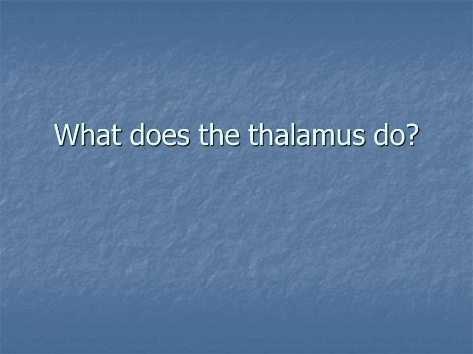 What does the thalamus do