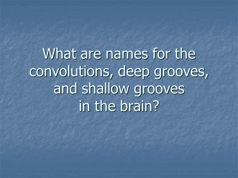 What are names for the convolutions, deep grooves, and shallow grooves in the brain