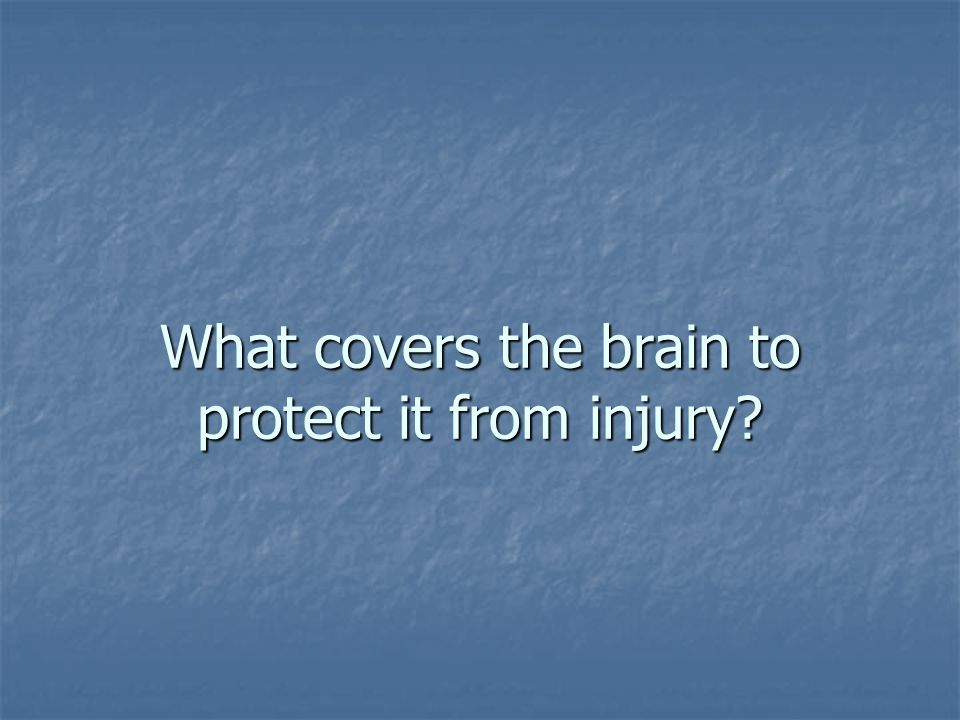 What covers the brain to protect it from injury