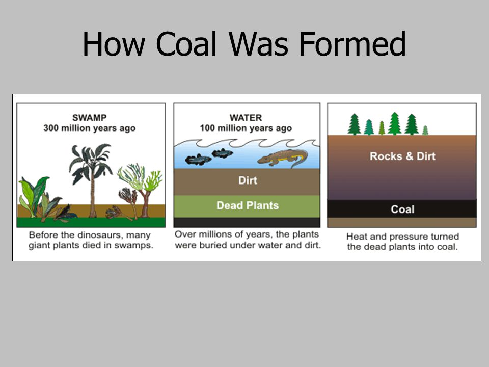 How Coal Was Formed