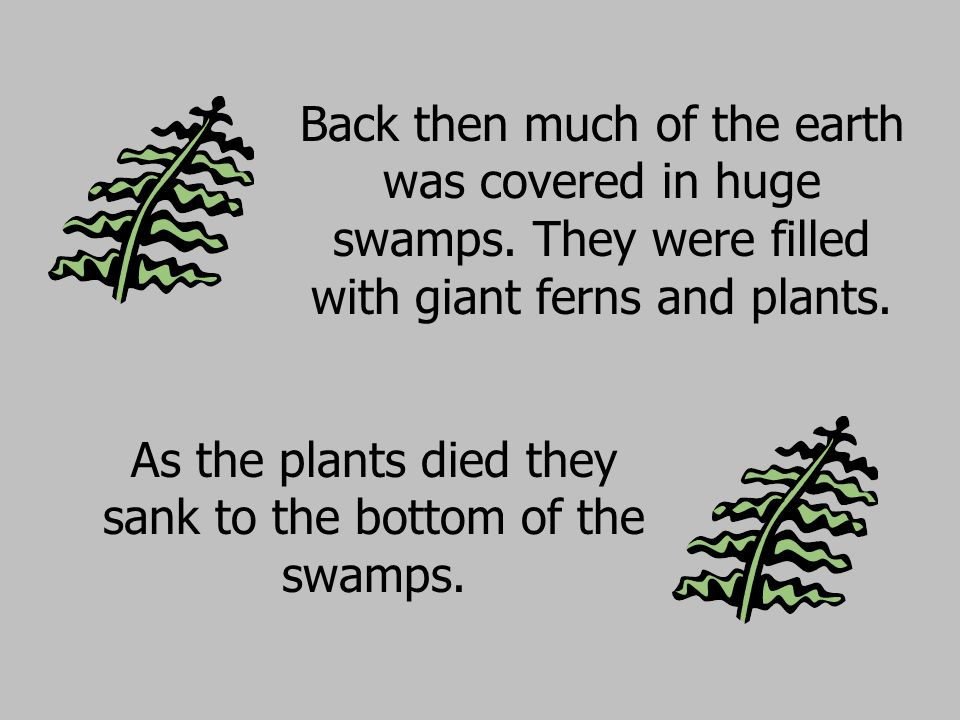 As the plants died they sank to the bottom of the swamps.
