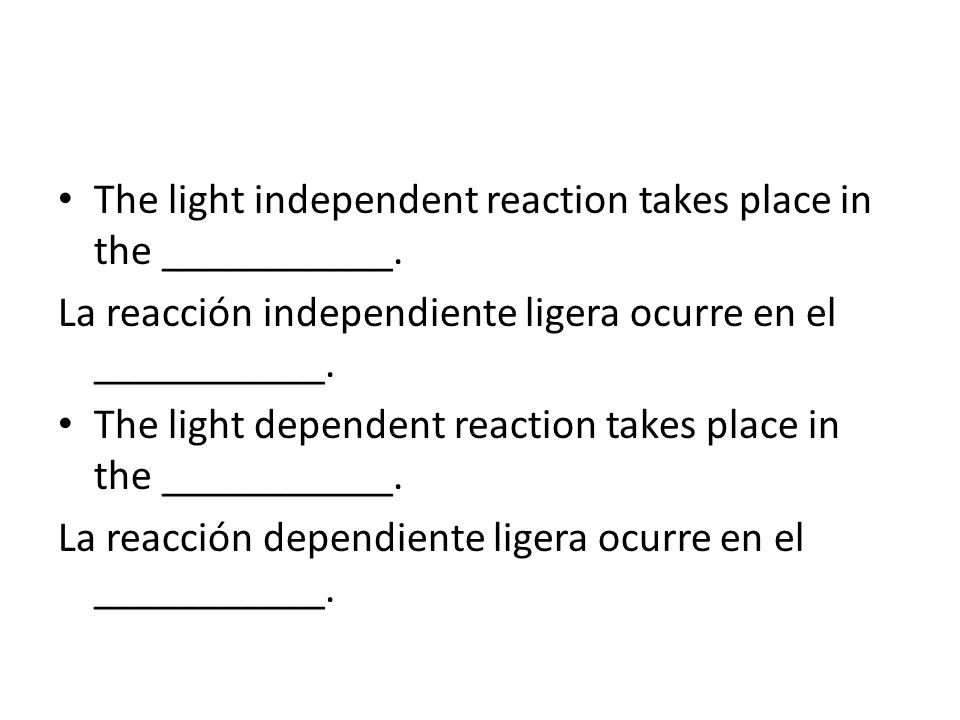 The light independent reaction takes place in the ___________.