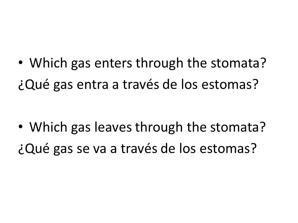 Which gas enters through the stomata