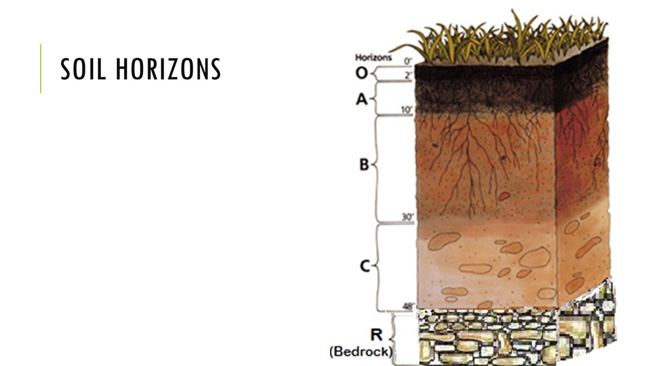 Properties of soils agriculture ppt download for Soil horizons