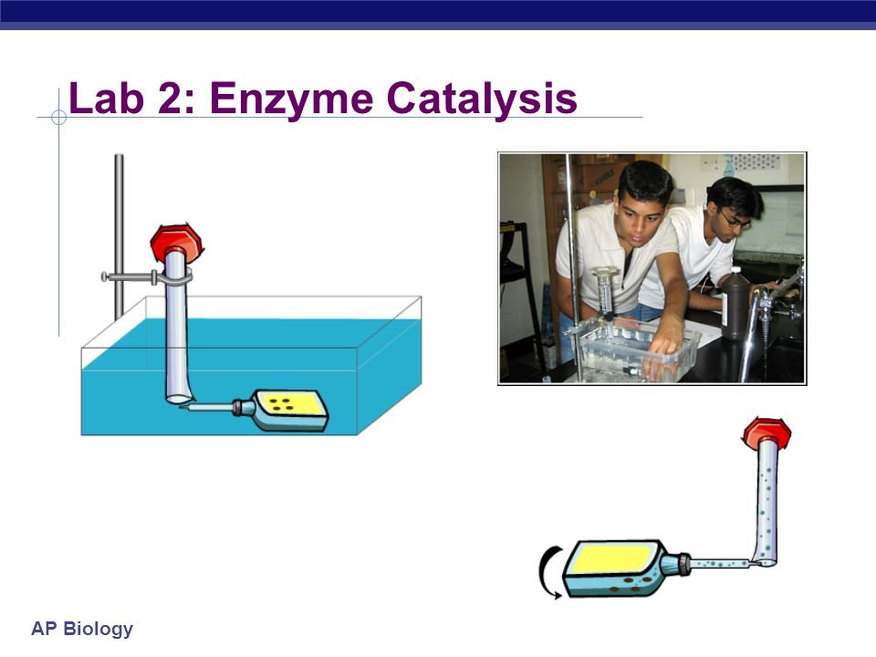 ap bio enzyme catalysis essay He then explains how you can measure the rate of an enzyme mediated reaction  catalase from yeast is used to break hydrogen peroxide down into water and.