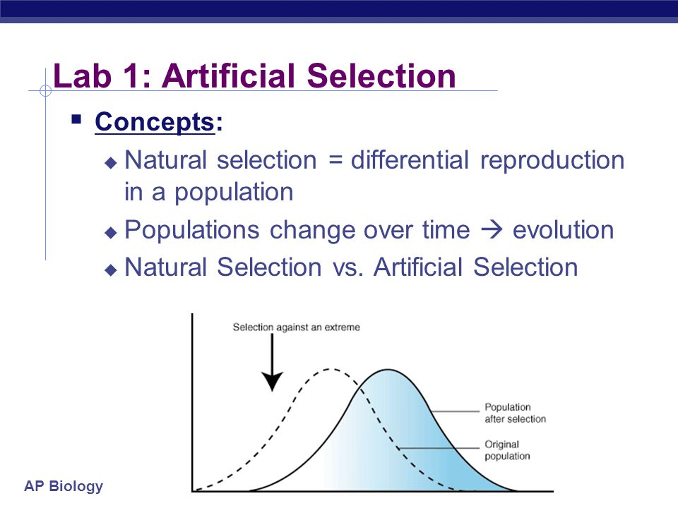 Ap Biology  Natural Selection